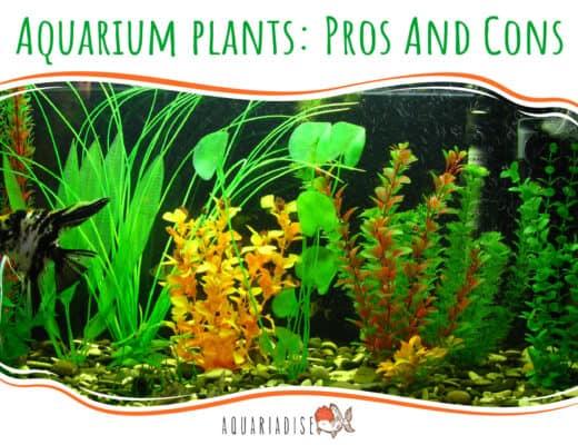 Aquarium plants Pros And Cons