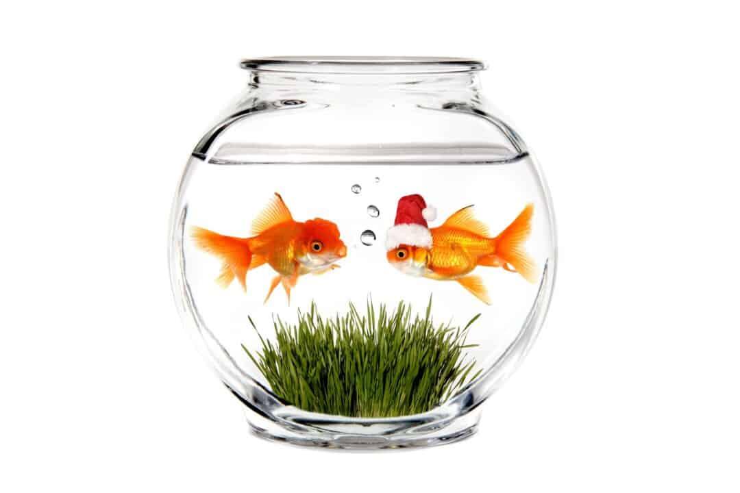 Goldfish Bowl Banned