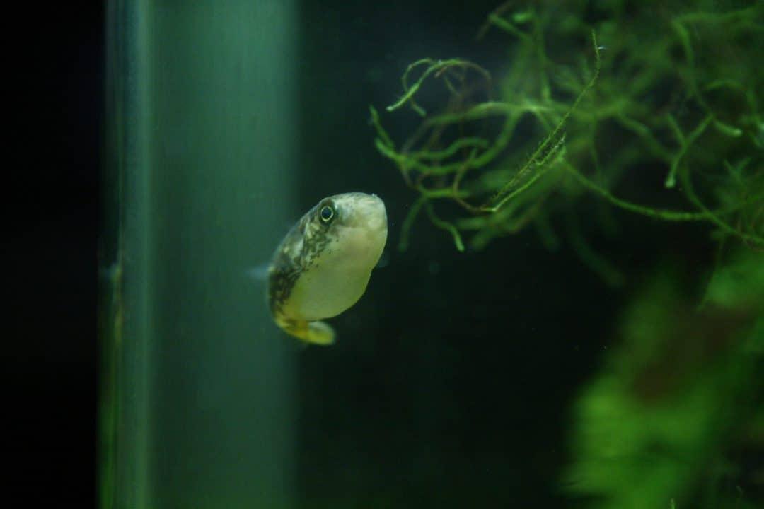 worst beginner fish