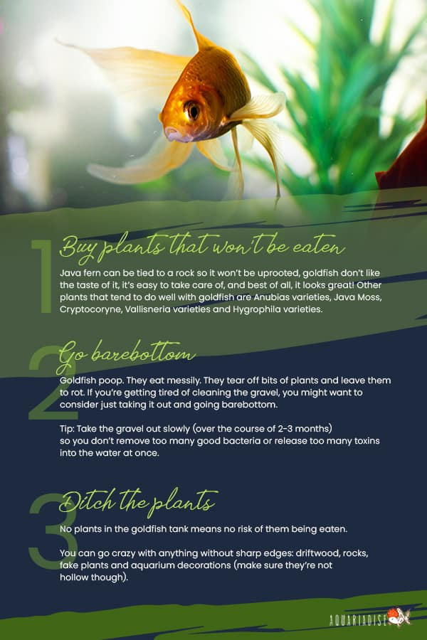 Best Plants For Goldfish Infographic