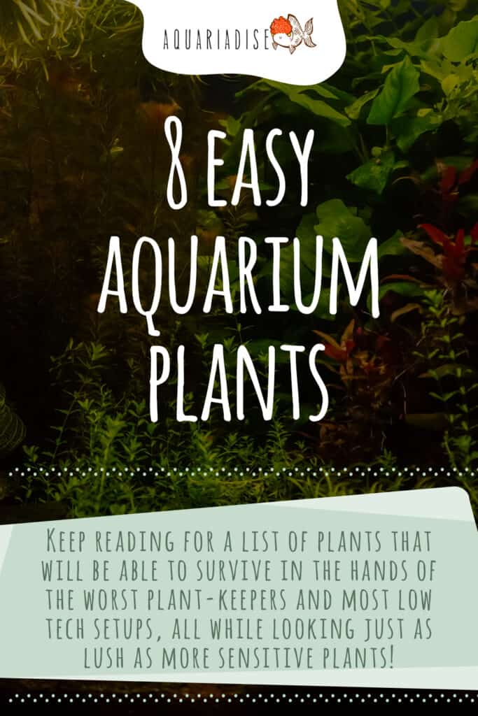 Easy Aquarium Plants