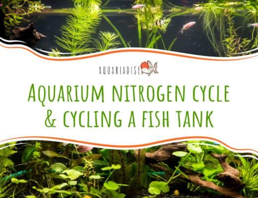 Aquarium nitrogen cycle & cycling a fish tank