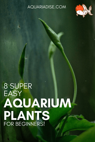 8 easy aquarium plants (that anyone can grow!)