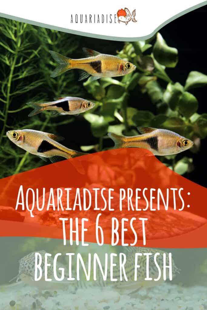 The Best Beginner Fish