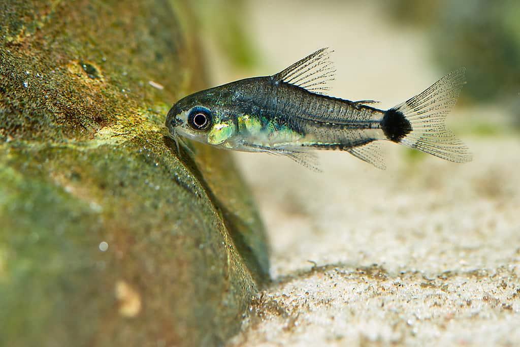 best beginner fish