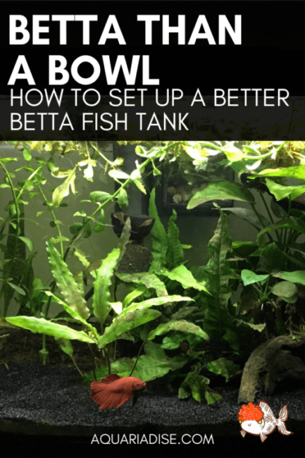 #Betta bowls are BAD! Find out why and get tips on setting up a better Betta #aquarium ?