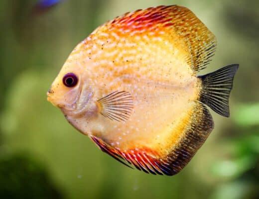 Fish Portrait