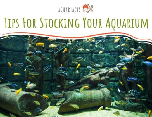 Tips For Stocking Your Aquarium