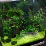 nano aquascape