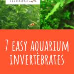 7 Easy Aquarium Invertebrates