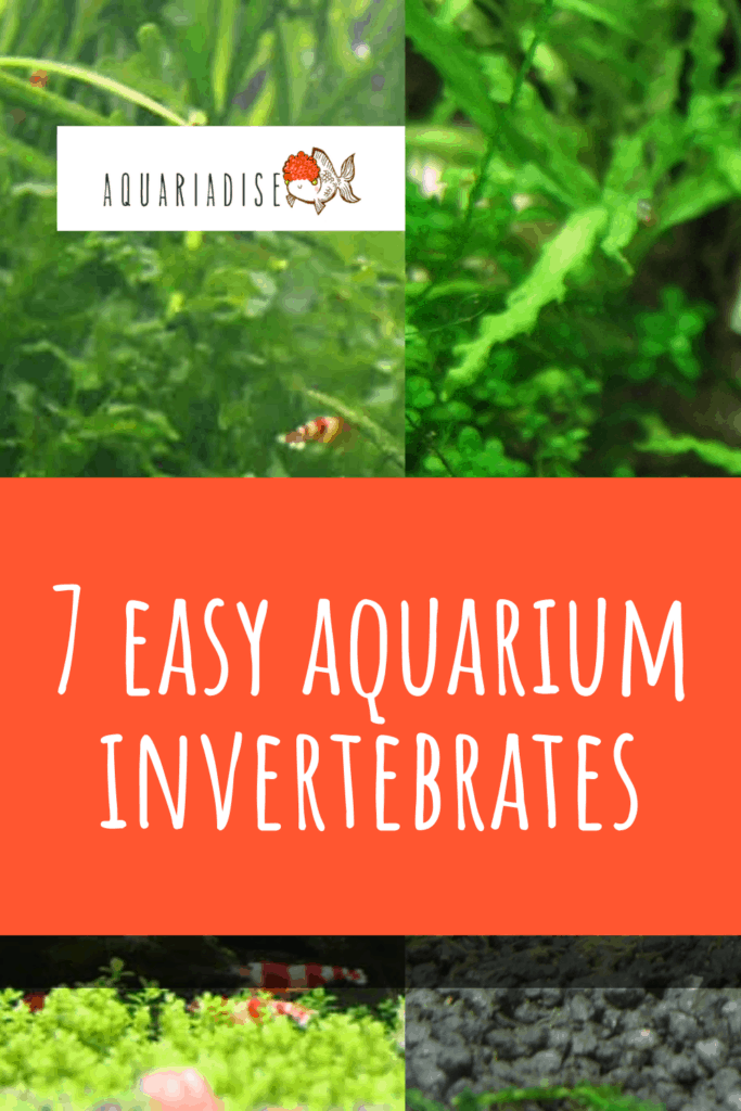 7 Easy Aquarium Invertebrates
