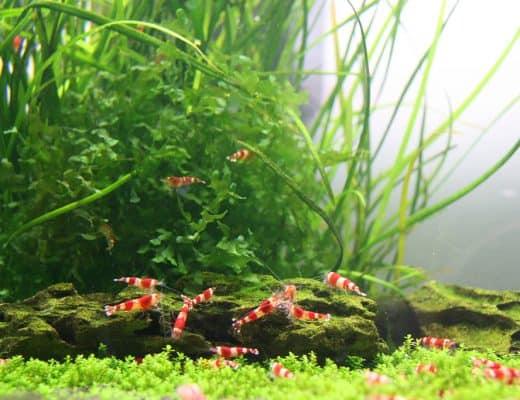 easy aquarium invertebrates