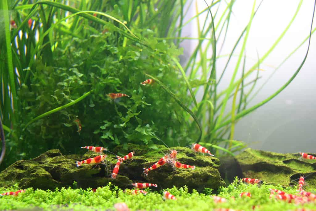 easy aquarium invertebrates