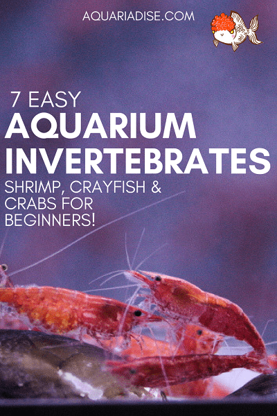 7 easy invertebrates for your aquarium!