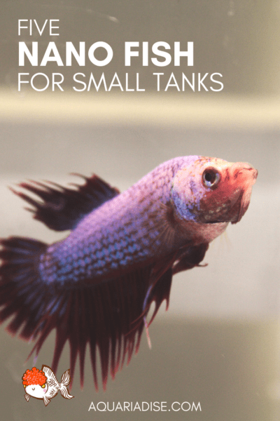 5 nano fish for small aquariums