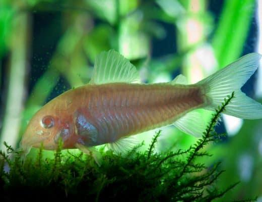 coldwater aquarium plants