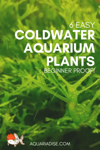 6 aquarium plants for coldwater tanks