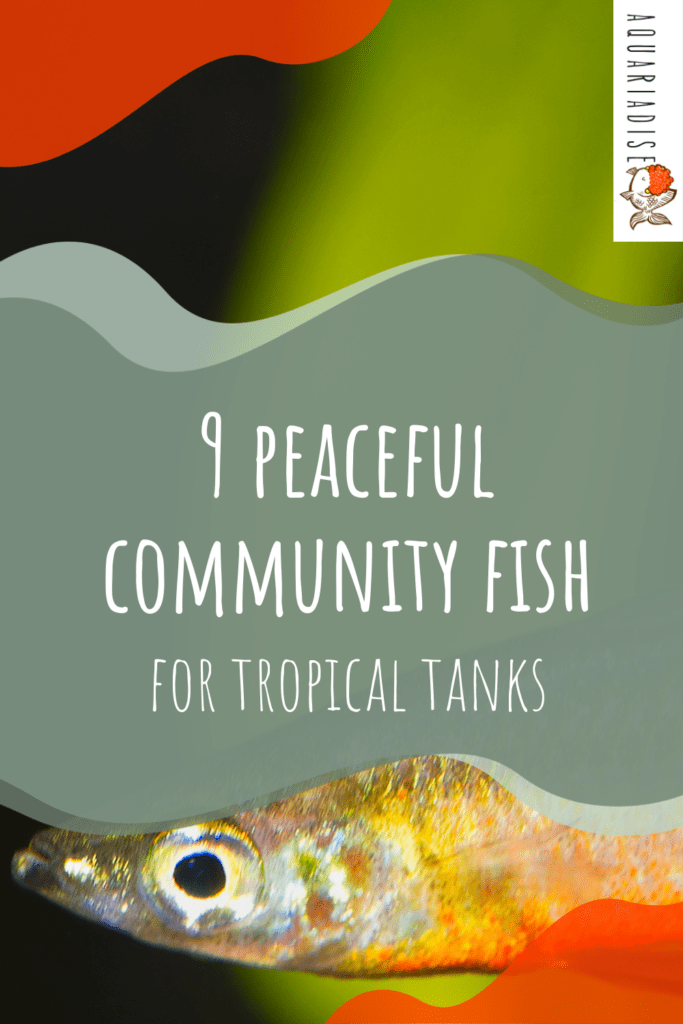 9 Peaceful Community Fish
