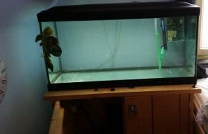 fishkeeping on a budget