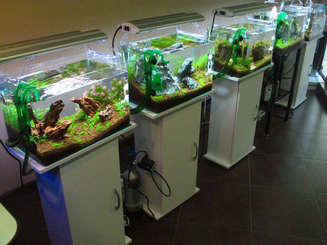 aquarium on a budget