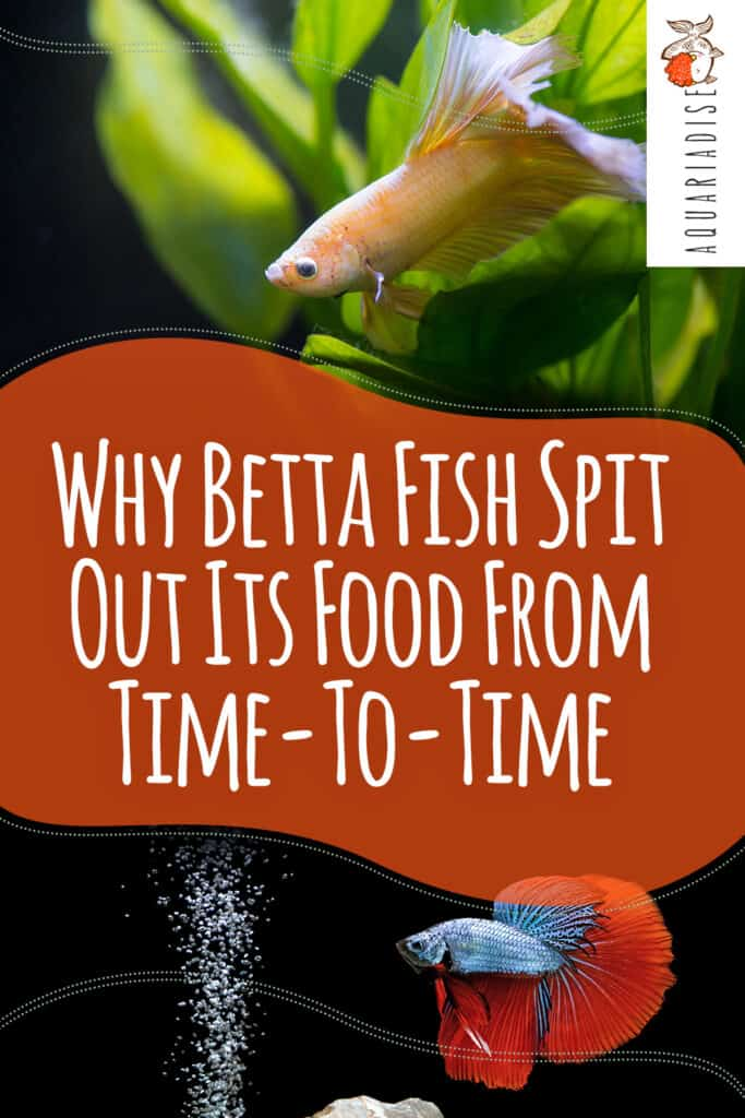 Betta Fish Feeding Guide