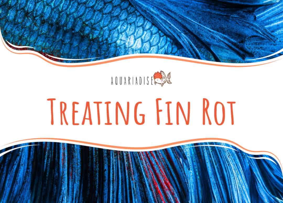 Treating Fin Rot
