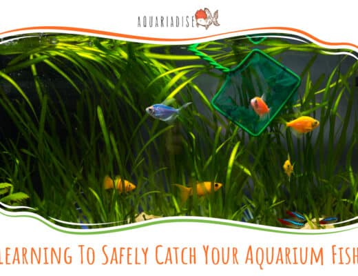 Learning To Safely Catch Your Aquarium Fish