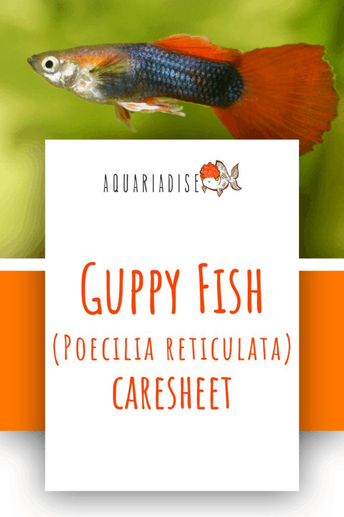 Guppy Fish Caresheet