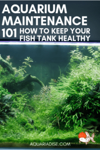 #Aquarium maintenance 101 | How to keep your #fishtank healthy