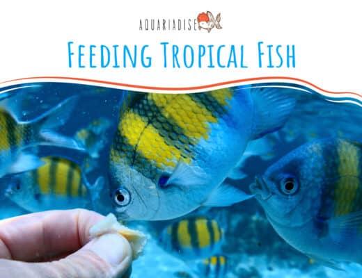 Feeding Tropical Fish