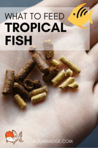 Feeding tropical fish | What & how to feed