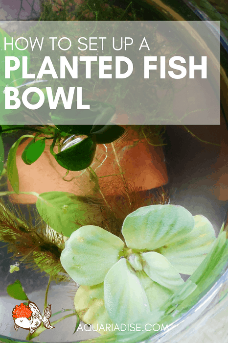 Planted aquarium bowl | Set up & maintenance guide!