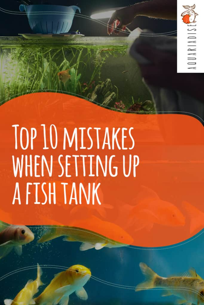 Top 10 Mistakes When Setting Up A Fish Tank