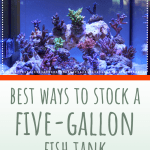 Stocking A Five-Galllon Fish Tank
