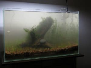 setting up a fish tank mistakes