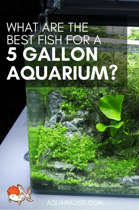 How to stock a 5 gallon aquarium?