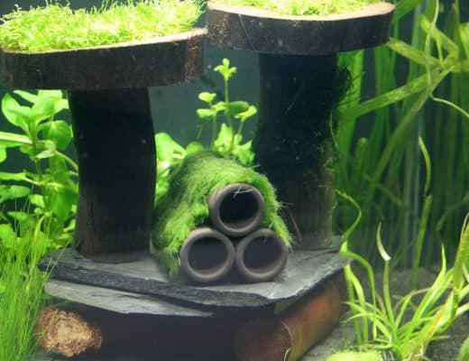 stocking a 5 gallon fish tank