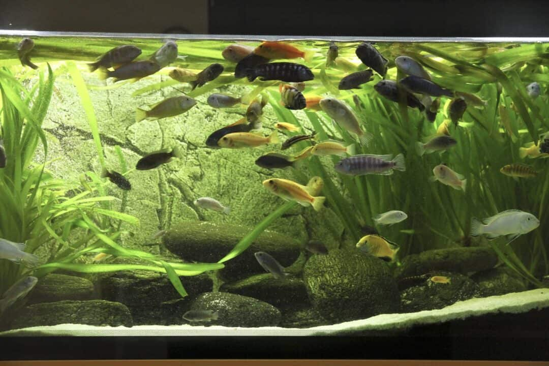 Setting Up Fish Tank Mistakes