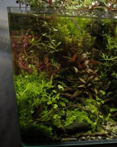 Top 10 mistakes while setting up an #aquarium