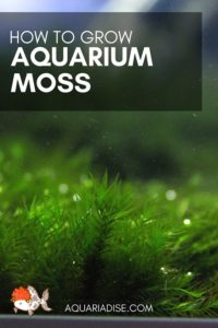 How to grow moss in your aquarium