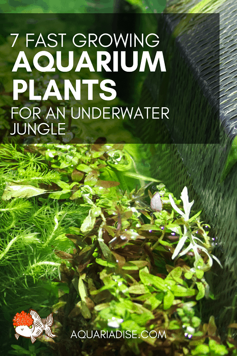 Lush aquarium goals | 7 fast growing aquatic plants