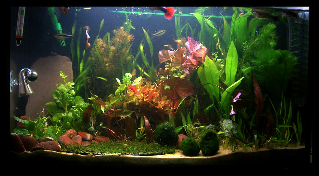 fast growing aquarium plants