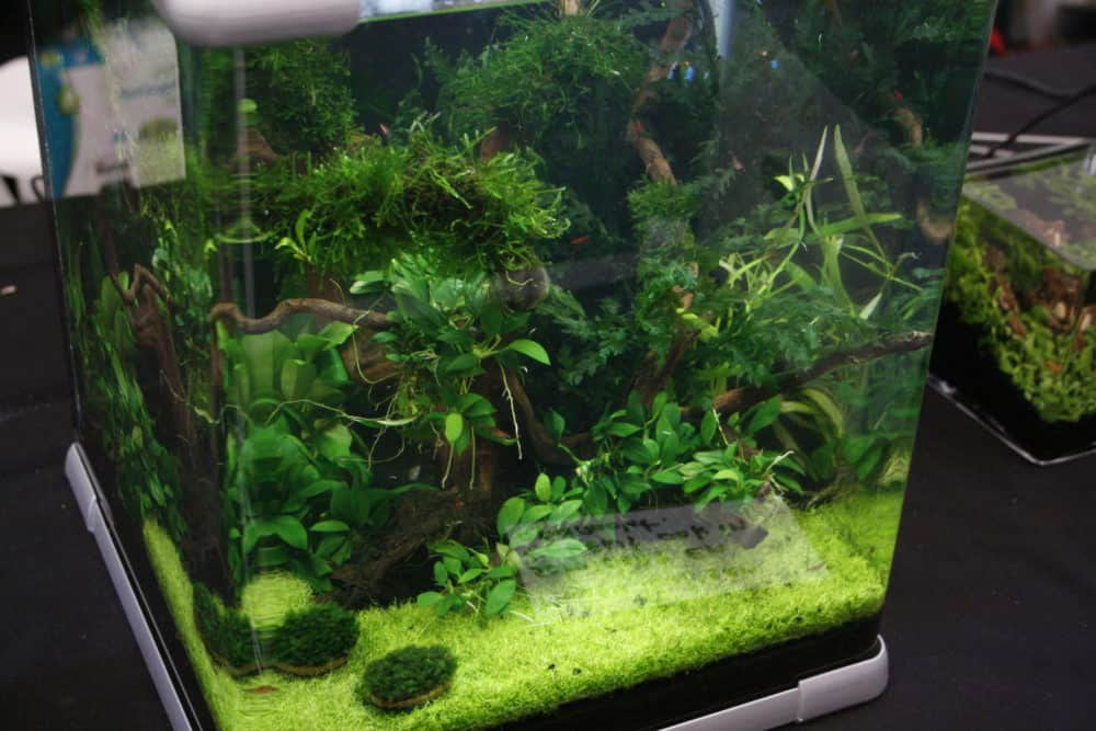 Nano planted tank | 6 tiny aquarium plants! | Aquariadise