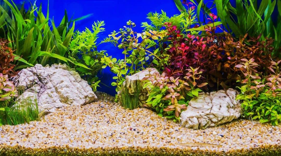 Nano Planted Tank