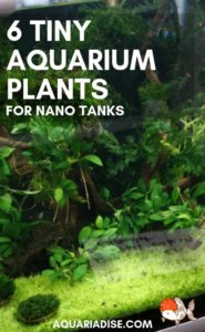 #Plants for tiny #aquariums - they exist!