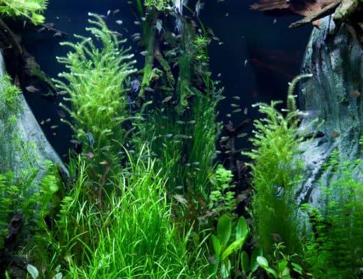 aquarium cooling methods