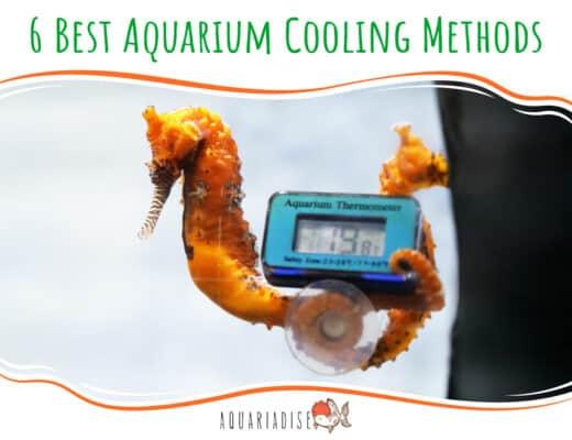 6 Best Aquarium Cooling Methods