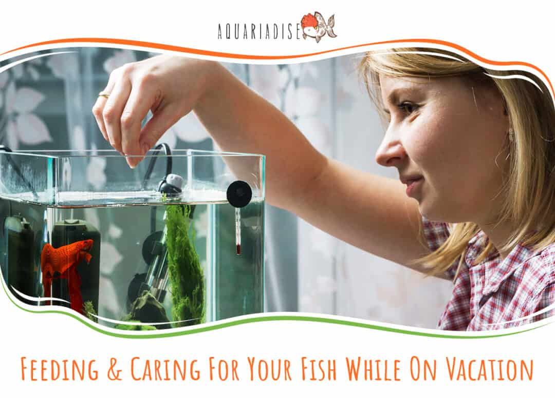 Feeding & Caring For Your Fish While On Vacation