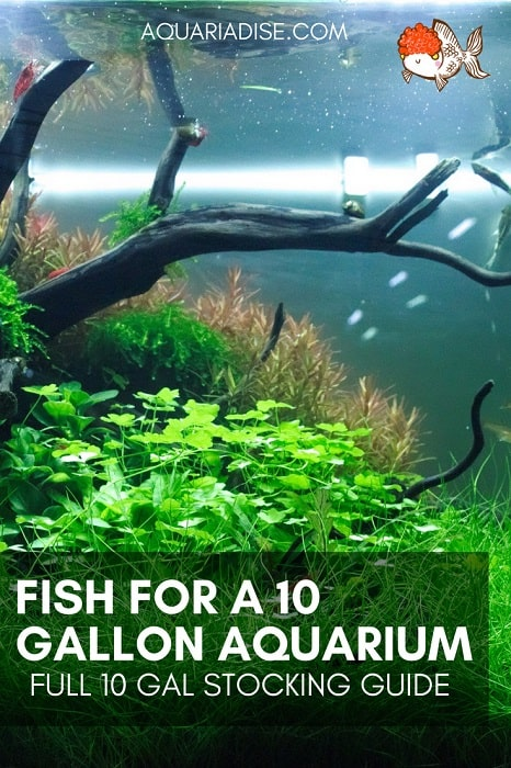The best fish for a 10 gallon aquarium | How to stock your 10 gal tank