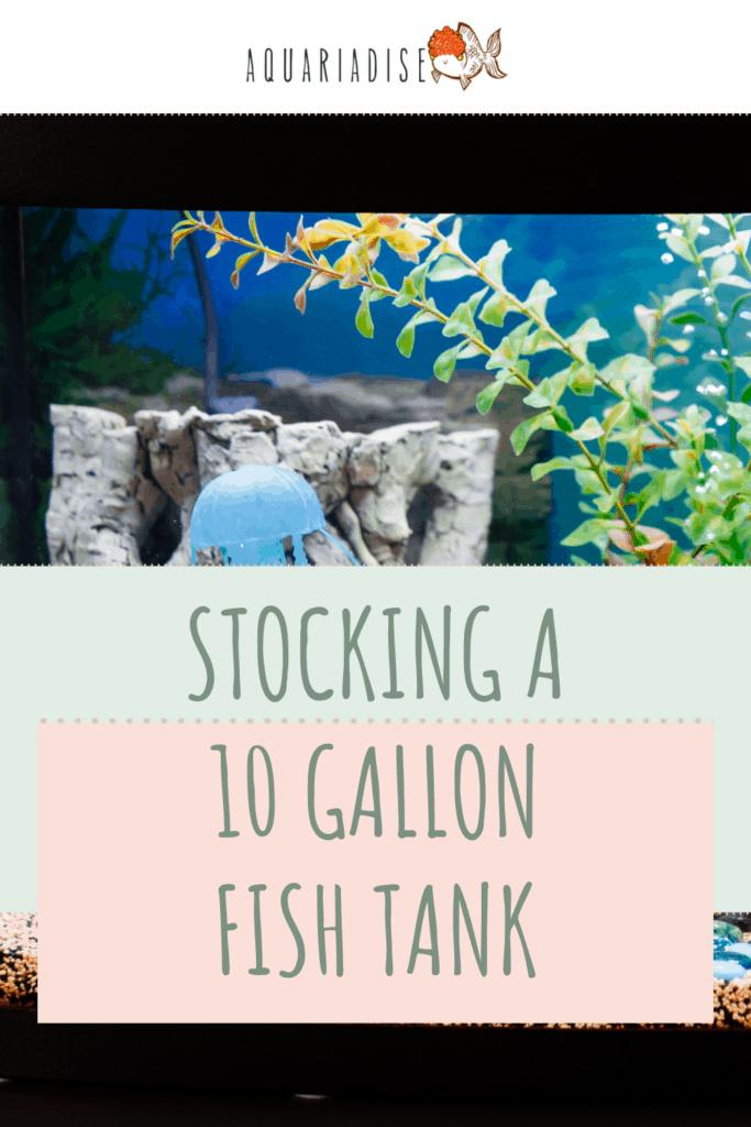 Stocking A 10-Gallon Fish Tank